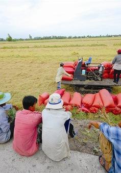 Đưa 1.000 kỹ sư trẻ về làm giám đốc HTX nông nghiệp