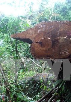 UNEP: Tội phạm môi trường lấy đi của thế giới khoảng 258 tỉ USD