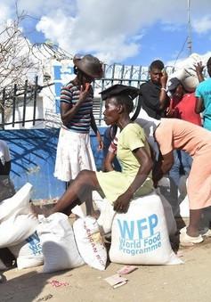 600.000 trẻ em tại Haiti cần viện trợ nhân đạo