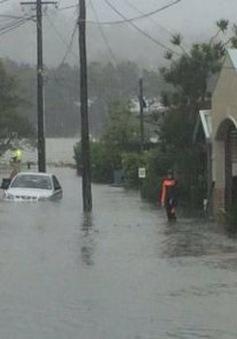 Australia: Hàng trăm người sơ tán do mưa to kéo dài