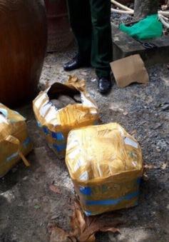 Bắt giữ 66 cá thể rùa nhập lậu từ Campuchia