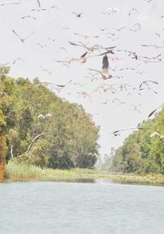 Làng Sen trở thành Khu Ramsar của thế giới!