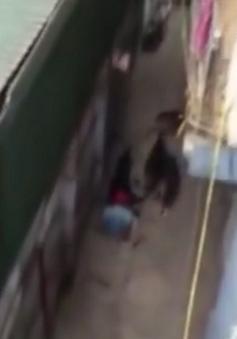 Vụ 4 con chó Tây cắn chủ: Nếu chúng thực sự tấn công, người chủ khó sống sót