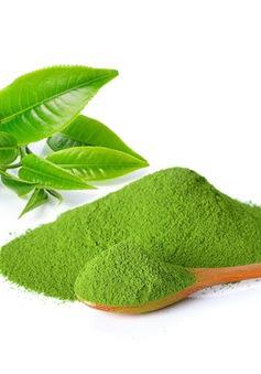 Khám phá quy trình sản xuất bột trà xanh matcha tại Việt Nam