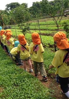 Trẻ em thành phố thích thú học làm nông dân