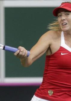 Sharapova chia tay Brisbane International vì chấn thương