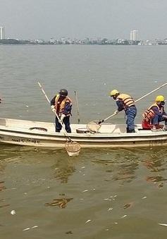 Hồ Tây:  Cá chết nổi lềnh bềnh, nồng nặc mùi hôi thối