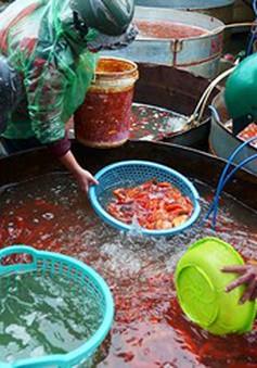 Tấp nập chợ cá ông Công ông Táo lớn nhất Hà Nội