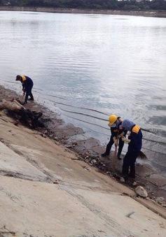 Cá chết tại Hồ Linh Đàm không phải là hiện tượng quá bất thường