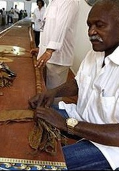 Phá kỷ lục Guinness về điếu xì gà dài nhất thế giới