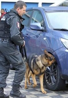 Kosovo chặn đứng âm mưu tấn công liên hoàn của IS