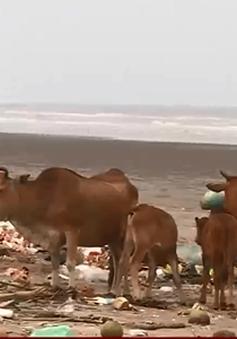 Biển Cồn Vành Thái Bình: Bãi tắm hay bãi rác?
