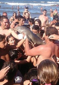 """Cá heo con chết """"tức tưởi"""" vì chụp ảnh selfie tại Argentina"""