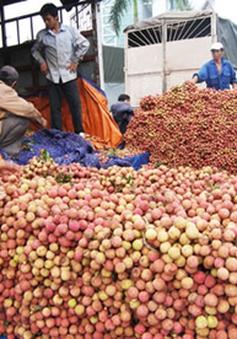 15.000 tấn vải thiều tươi xuất khẩu sang Trung Quốc