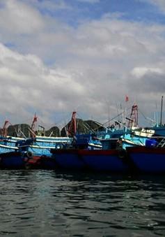 Bão số 1: Ngư dân và âu thuyền ở Bạch Long Vĩ đều an toàn