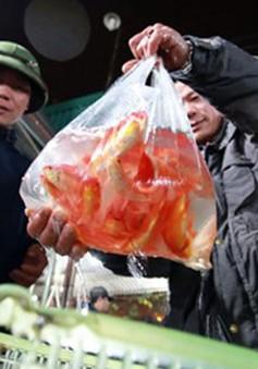 Ngày ông Công, ông Táo: Tiểu thương thu lời cao với cá chép đỏ