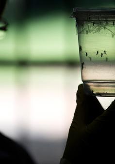 """Sau Nam Mỹ, virus Zika chính thức """"tấn công"""" nước Mỹ"""