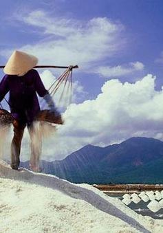 TP.HCM: Mua 105.000 tấn muối cứu diêm dân