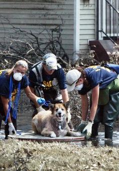 Hành trình giải cứu động vật của Tổ chức bảo vệ động vật Mỹ