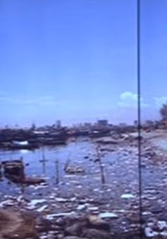 Ô nhiễm nghiêm trọng tại Âu thuyền Thọ Quang, Đà Nẵng