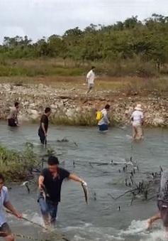 Người dân Bình Thuận nô nức bắt cá trên kênh xả lũ