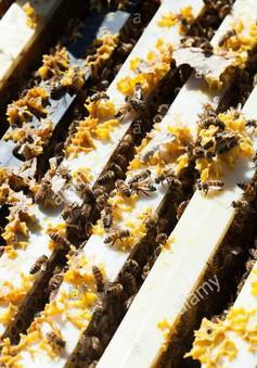 Hà Giang ban hành lệnh cấm người nuôi ong ngoại tỉnh