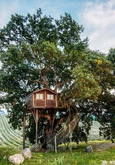 Ngắm căn nhà cây xinh xắn giữa cánh đồng oải hương
