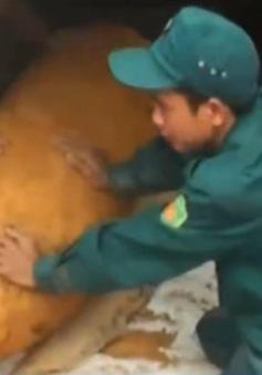 Hà Tĩnh: Phát hiện bom trong vườn nhà