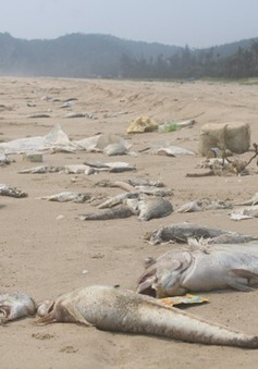 Chính phủ tập trung giải quyết sự cố thủy sản chết tại miền Trung