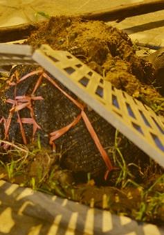 Hà Nội công bố các công ty trồng cây để nguyên bầu nilon