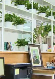 Xu hướng thiết kế văn phòng ngập thiên nhiên