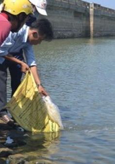 An Giang: Nhiều hộ trên sông Cái Vừng thử thả cá trở lại