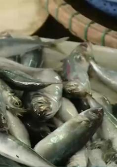 Các mẫu hải sản tươi sống ở 4 tỉnh miền Trung đều an toàn