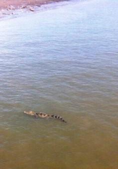 Cá sấu 70kg trên sông ở Long An đã mắc lưới