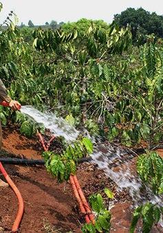 Cần áp dụng kỹ thuật tưới nước tiết kiệm trong tình hình khô hạn