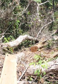 Vụ cán bộ bảo vệ rừng bị truy sát: Một nạn nhân qua cơn nguy kịch