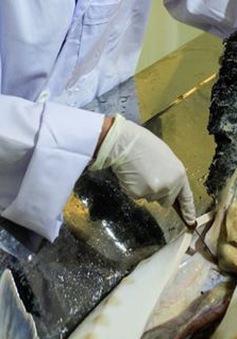 Cận cảnh nuôi cá tầm lấy trứng kỳ công tại Italia