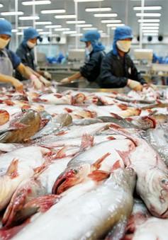 Cá tra, ba sa vào Mỹ nguy cơ chịu thuế cao: Việt Nam có thể kháng cáo