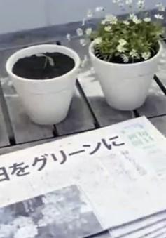 Độc đáo tờ báo có thể… trồng thành cây