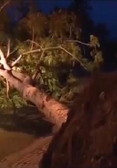 Nhiều cây xanh ngã đổ do bão số 4 tại TT-Huế và Quảng Nam