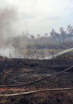 Vụ cháy vùng than bùn ở Cà Mau do người dân đốt đồng