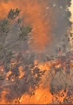 70ha rừng cháy rụi ở Nghệ An
