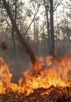 Indonesia cảnh báo khói mù lan rộng khi cháy rừng bùng phát