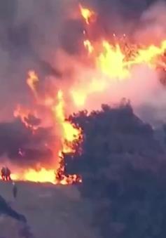 """Cháy rừng lan rộng tại California """"uy hiếp"""" cuộc sống người dân"""
