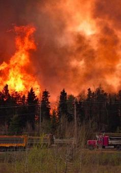 Cháy rừng - Thảm họa tốn kém nhất trong lịch sử Canada?