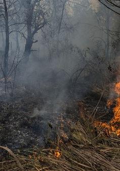 Hơn 100.000 người có thể đã chết do khói mù ở Indonesia