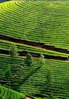 Nông sản Việt xuất khẩu: Cần nâng tầm thương hiệu