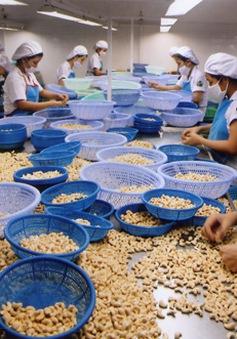 Thiếu nguyên liệu điều, nhiều DN sản xuất dè chừng