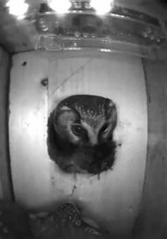 Tổ chim thông minh – Lăng kính giúp khám phá cuộc sống các loài chim