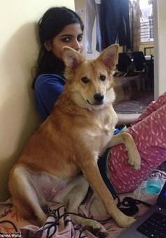 Ấn Độ: Chú rể bị cô dâu từ hôn vì... không thích chó